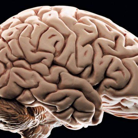 Sağlıklı Beyin, Güçlü Hafıza