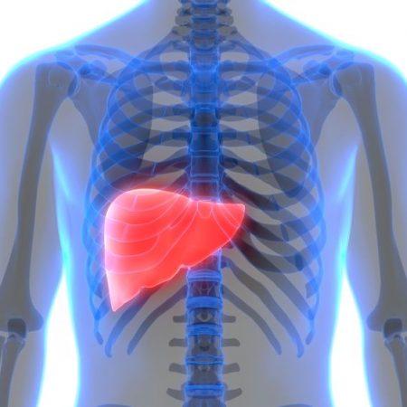 Karaciğer Yağlanması Nedenleri Ve İyi Gelen Besinler