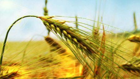 Permakültür (Sürdürülebilir Tarım) Nedir?